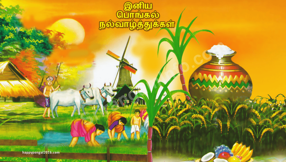 Thai Pongal Wishes, Quotes, Messages and Greetings