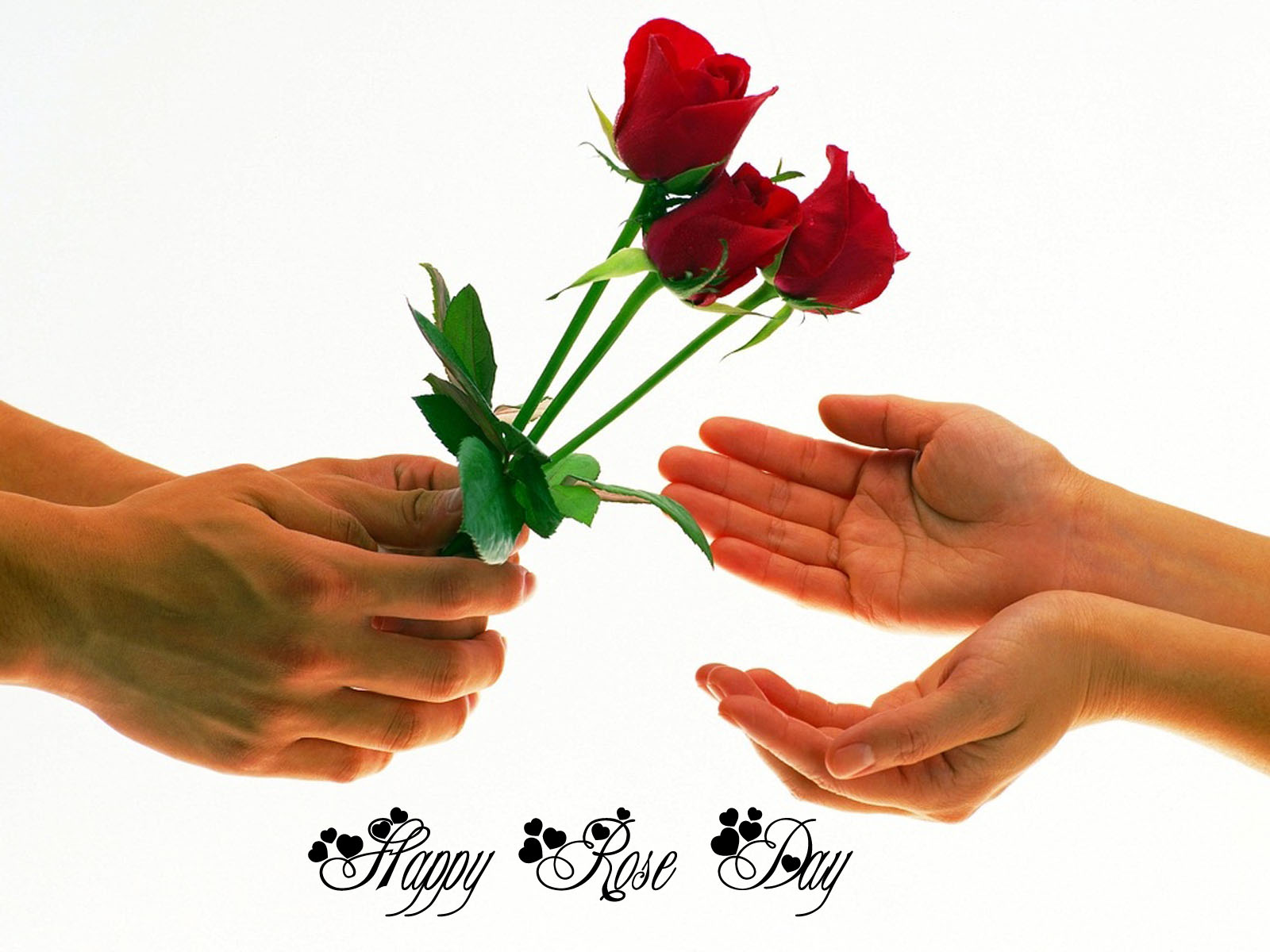 Happy Rose Day Images, Pics, Quotes, Wishes, Photos