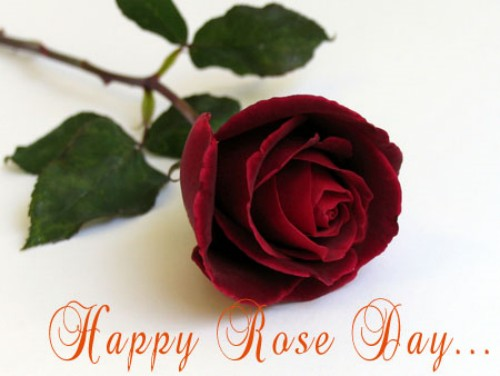 Valentines Day - Rose Day Wishes, Quotes, SMS and Messages